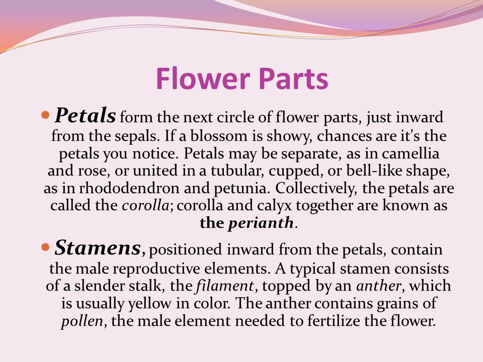Flower Parts Petals form the next circle of flower parts, just inward from the sepals.