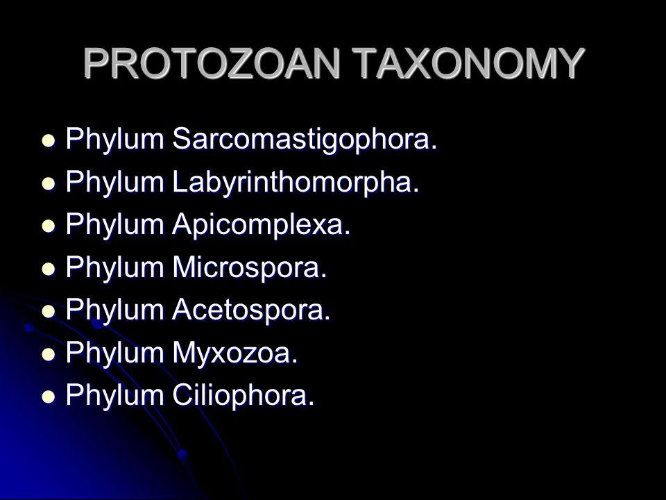PROTOZOAN TAXONOMY Phylum Sarcomastigophora. Phylum Sarcomastigophora.
