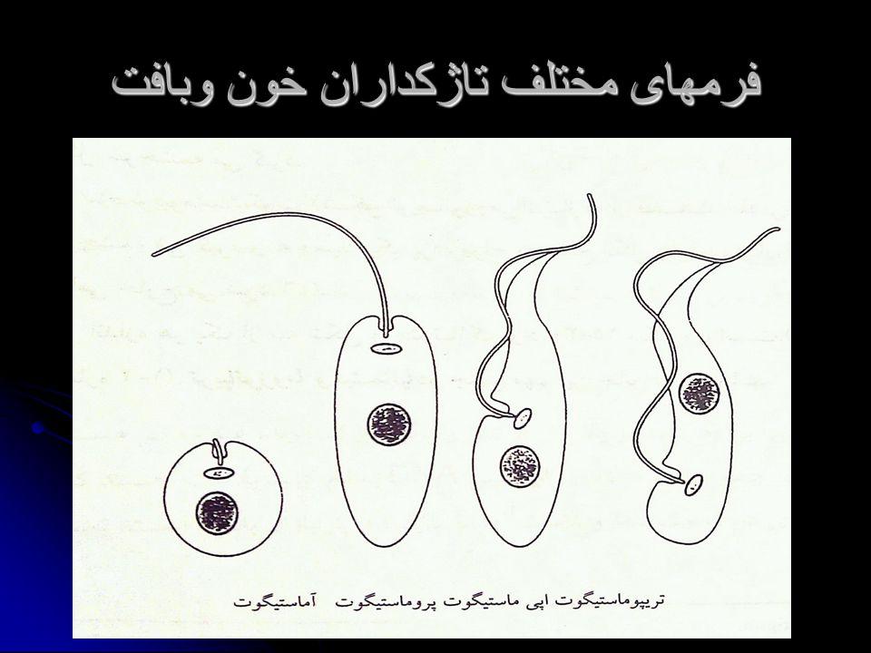 فرمهای مختلف تاژکداران خون وبافت