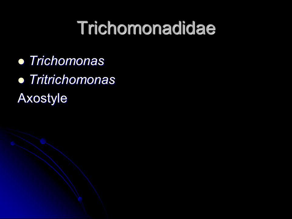 Trichomonadidae Trichomonas Trichomonas Tritrichomonas TritrichomonasAxostyle