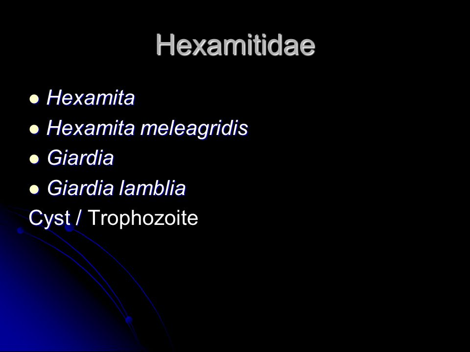 Hexamitidae Hexamita Hexamita Hexamita meleagridis Hexamita meleagridis Giardia Giardia Giardia lamblia Giardia lamblia Cyst / Cyst / Trophozoite