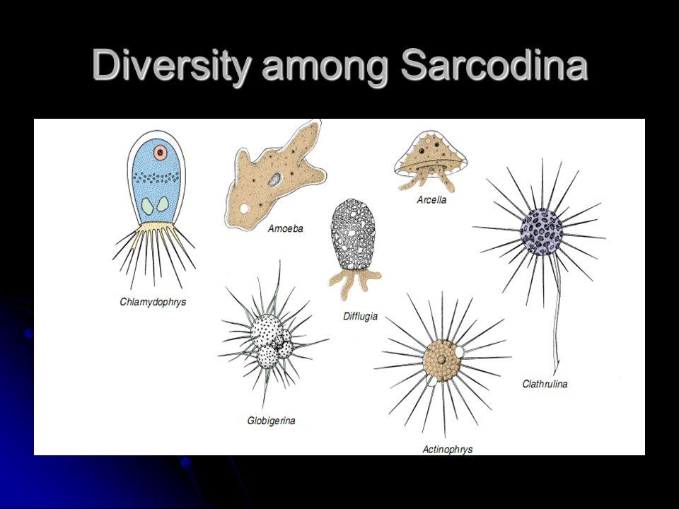 Diversity among Sarcodina