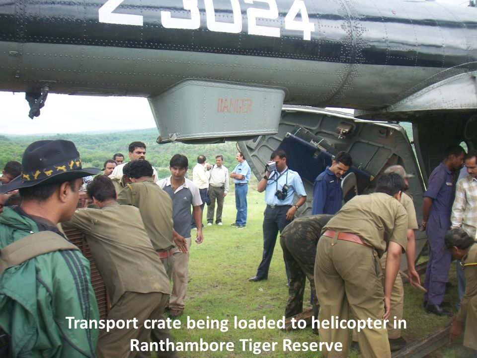 Transport crate being loaded to helicopter in Ranthambore Tiger Reserve