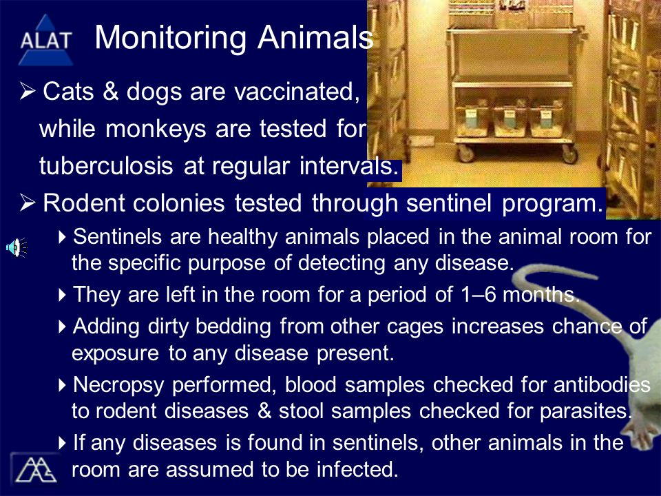 Monitoring Animals  Cats & dogs are vaccinated, while monkeys are tested for tuberculosis at regular intervals.  Rodent colonies tested through sent