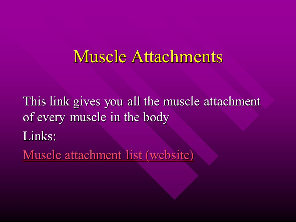 Muscle Attachments This link gives you all the muscle attachment of every muscle in the body Links: Muscle attachment list (website) Muscle attachment list (website)
