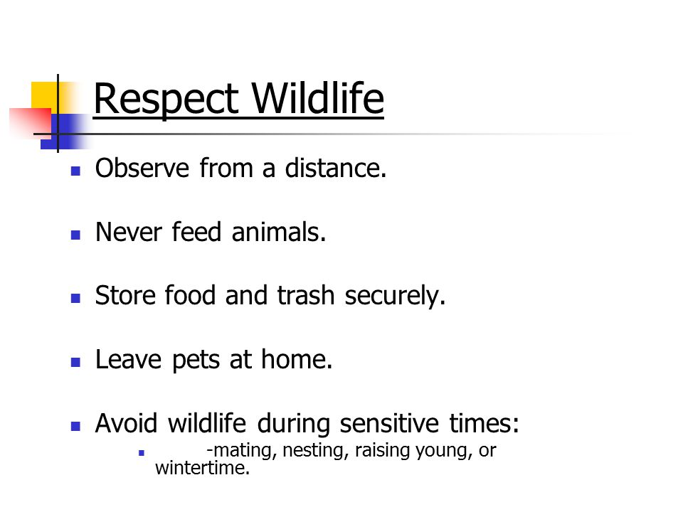 Respect Wildlife Observe from a distance. Never feed animals.