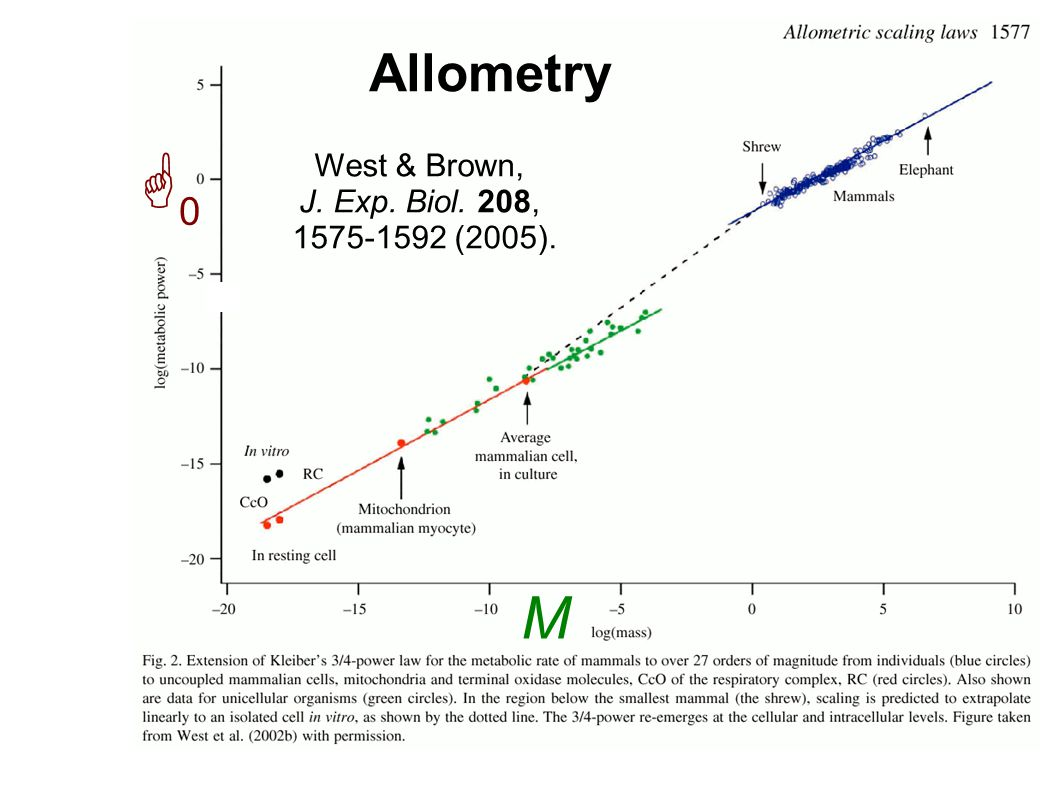 Allometry G0G0 M West & Brown, J. Exp. Biol. 208, 1575-1592 (2005).