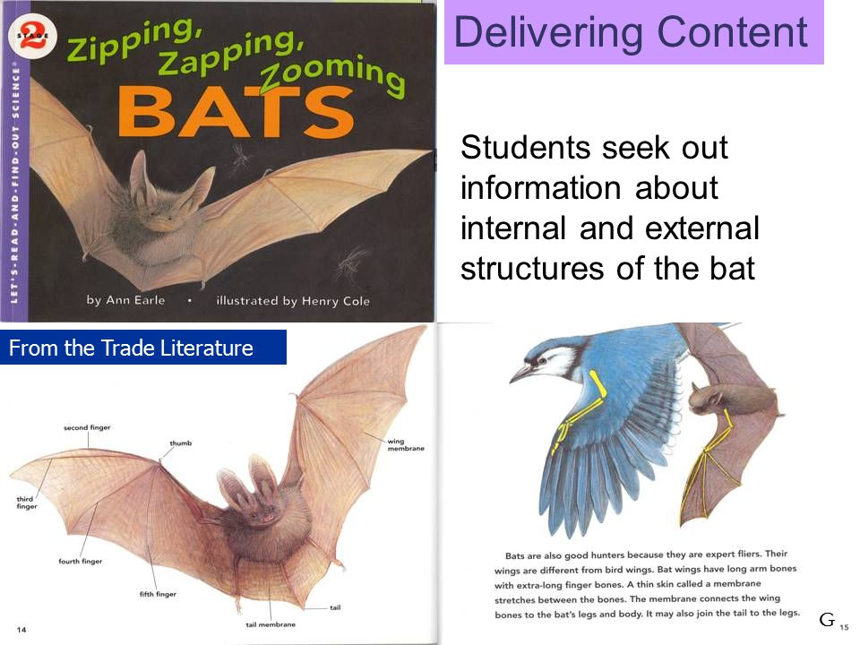 Students seek out information about internal and external structures of the bat G From the Trade Literature Delivering Content