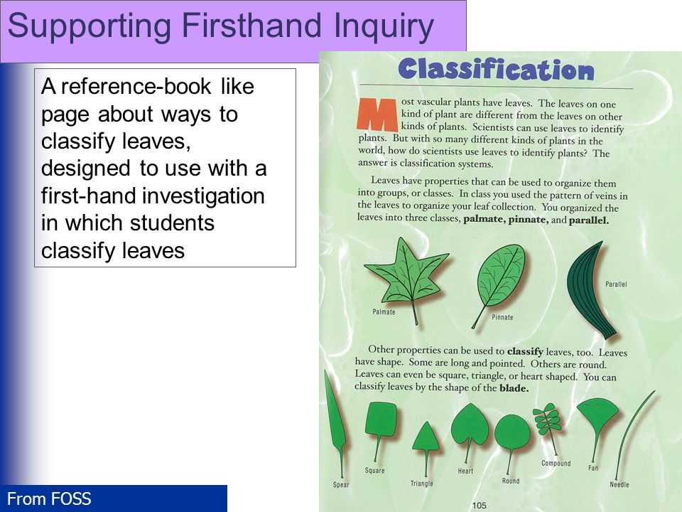 A reference-book like page about ways to classify leaves, designed to use with a first-hand investigation in which students classify leaves From FOSS