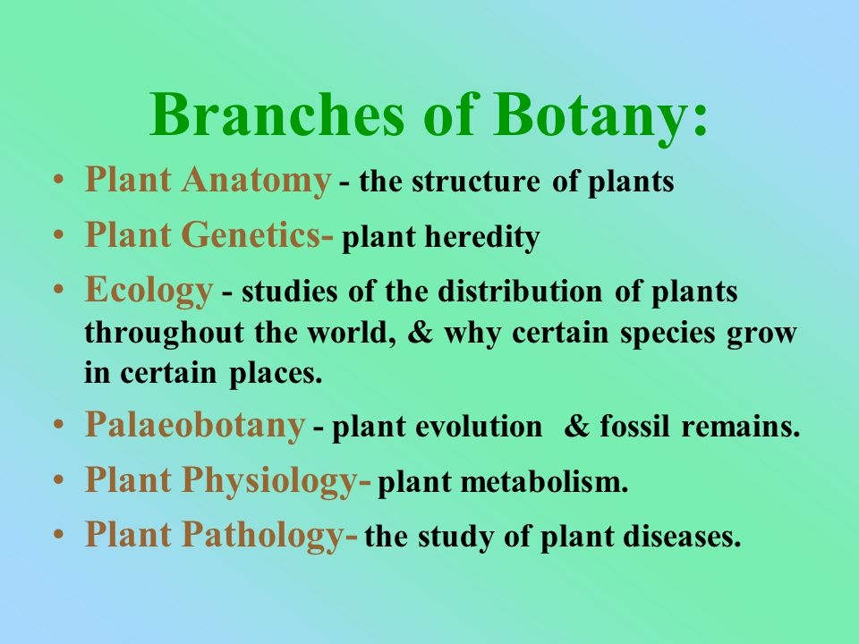 Branches of Botany: Plant Anatomy - the structure of plants Plant Genetics- plant heredity Ecology - studies of the distribution of plants throughout the world, & why certain species grow in certain places.