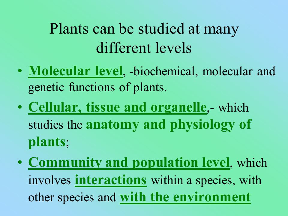 Plants can be studied at many different levels Molecular level, -biochemical, molecular and genetic functions of plants.