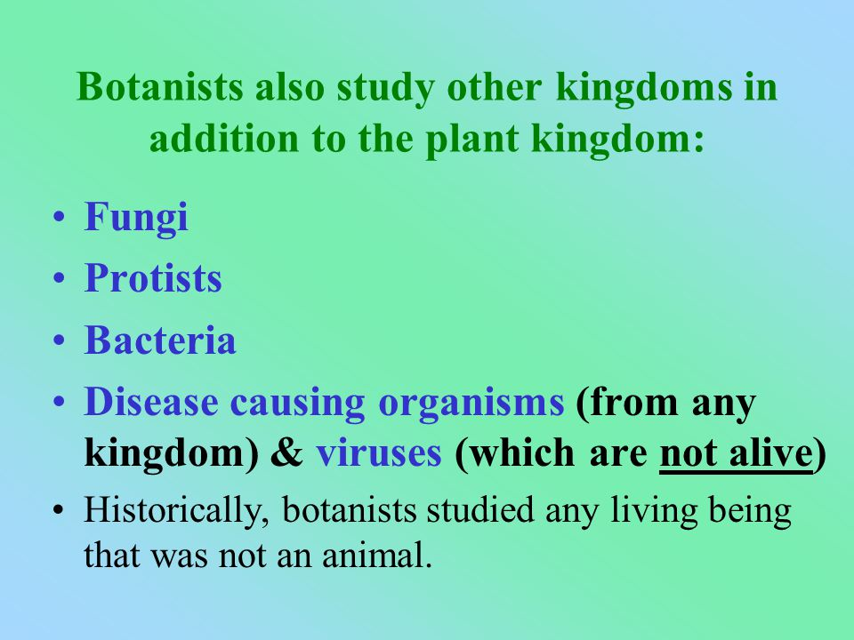 Botanists also study other kingdoms in addition to the plant kingdom: Fungi Protists Bacteria Disease causing organisms (from any kingdom) & viruses (which are not alive) Historically, botanists studied any living being that was not an animal.