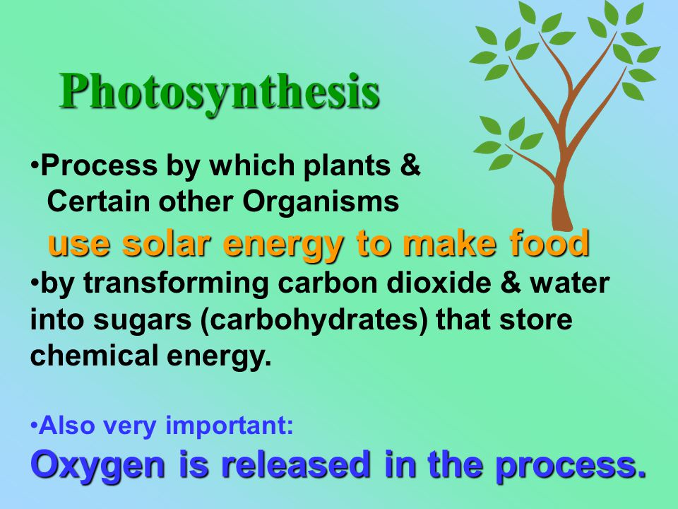 Process by which plants & Certain other Organisms use solar energy to make food by transforming carbon dioxide & water into sugars (carbohydrates) that store chemical energy.