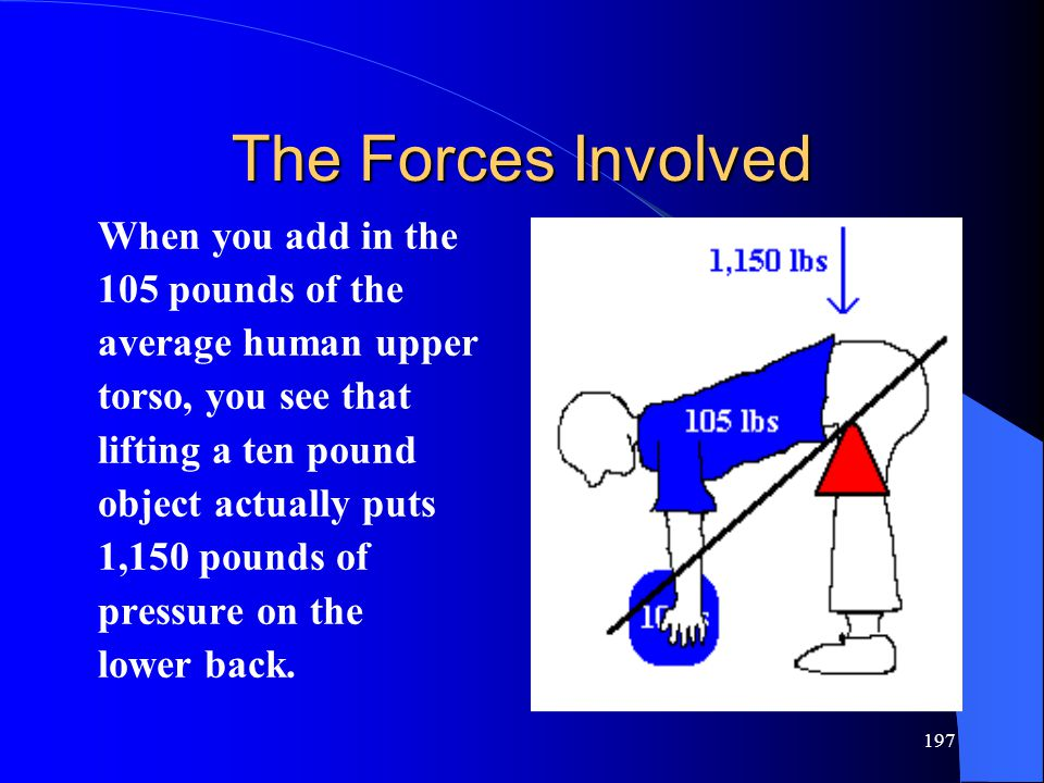 197 The Forces Involved When you add in the 105 pounds of the average human upper torso, you see that lifting a ten pound object actually puts 1,150 pounds of pressure on the lower back.