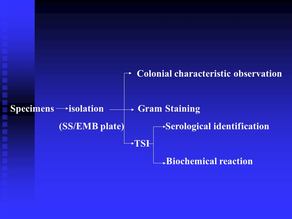 Colonial characteristic observation Specimens isolation Gram Staining (SS/EMB plate) Serological identification TSI Biochemical reaction