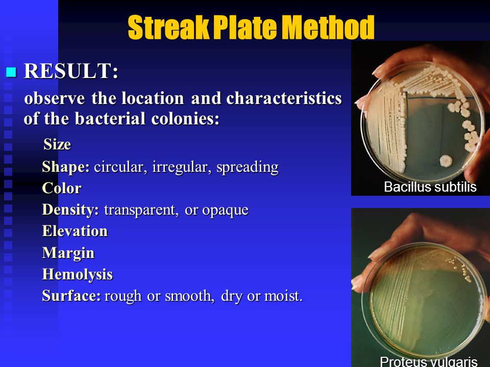 Streak Plate Method RESULT: RESULT: observe the location and characteristics of the bacterial colonies: observe the location and characteristics of the bacterial colonies: Size Size Shape: circular, irregular, spreading Shape: circular, irregular, spreading Color Color Density: transparent, or opaque Density: transparent, or opaque Elevation Elevation Margin Margin Hemolysis Hemolysis Surface: rough or smooth, dry or moist.