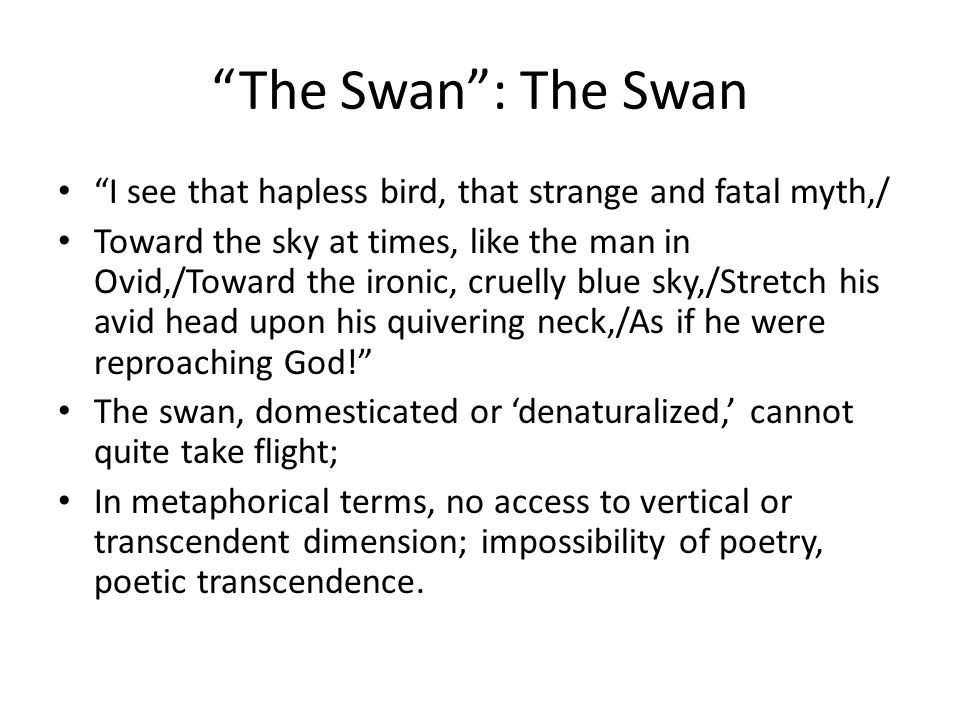 The Swan : The Swan I see that hapless bird, that strange and fatal myth,/ Toward the sky at times, like the man in Ovid,/Toward the ironic, cruelly blue sky,/Stretch his avid head upon his quivering neck,/As if he were reproaching God! The swan, domesticated or 'denaturalized,' cannot quite take flight; In metaphorical terms, no access to vertical or transcendent dimension; impossibility of poetry, poetic transcendence.