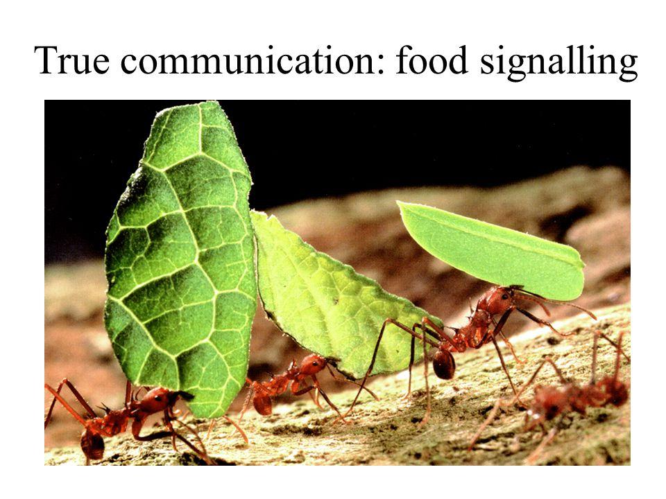 True communication: food signalling
