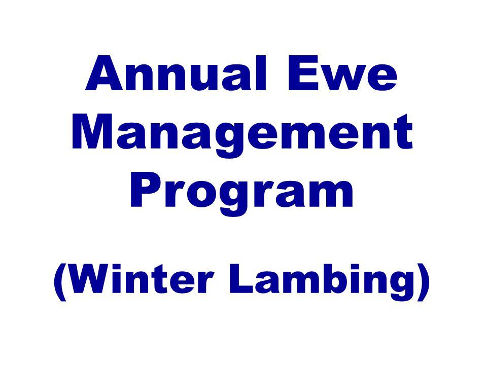 Annual Ewe Management Program (Winter Lambing)