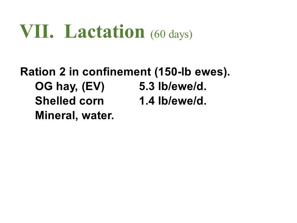 VII.Lactation (60 days) Ration 2 in confinement (150-lb ewes).