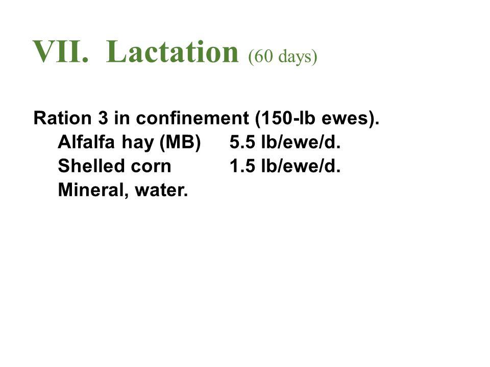 VII.Lactation (60 days) Ration 3 in confinement (150-lb ewes).