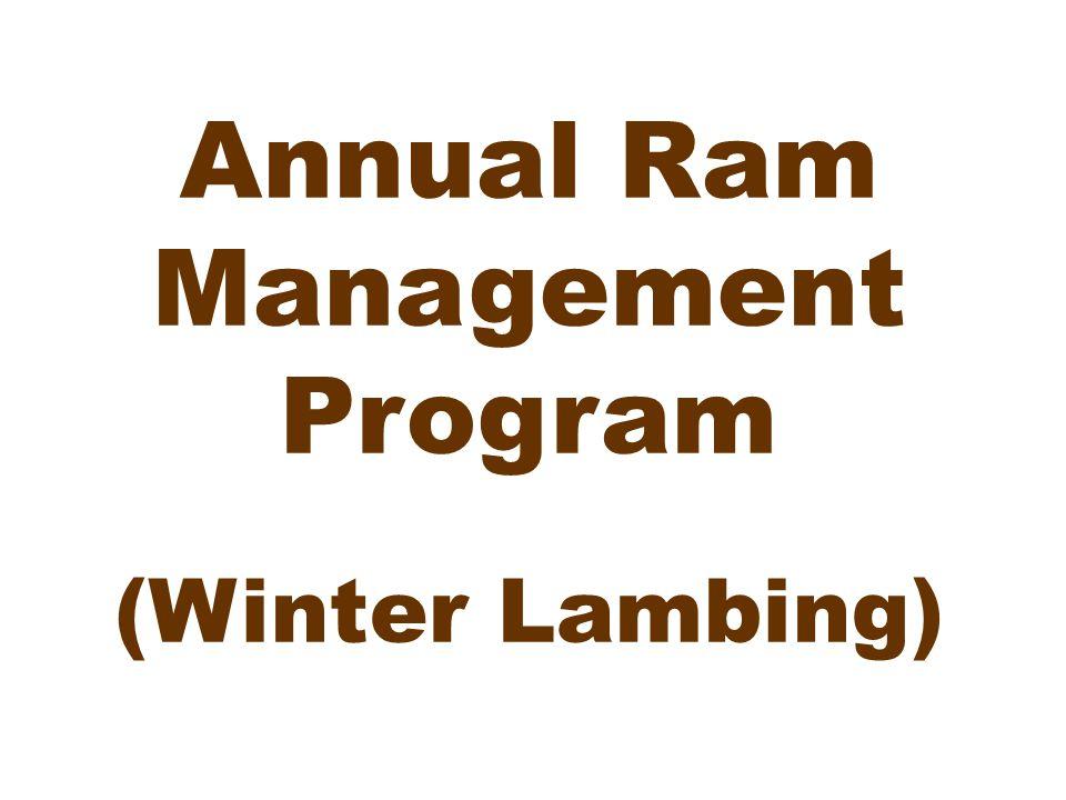 Annual Ram Management Program (Winter Lambing)