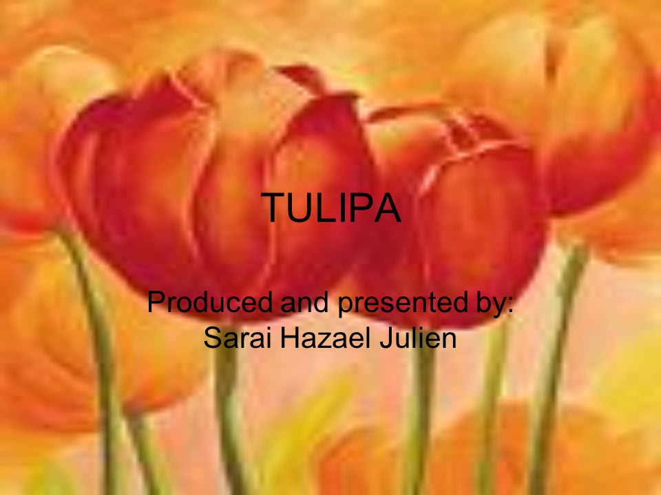 TULIPA Produced and presented by: Sarai Hazael Julien