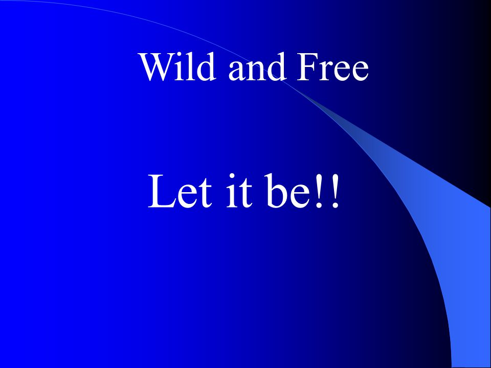 Wild and Free Let it be!!