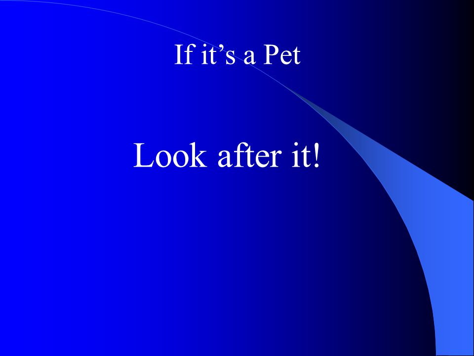 If it's a Pet Look after it!