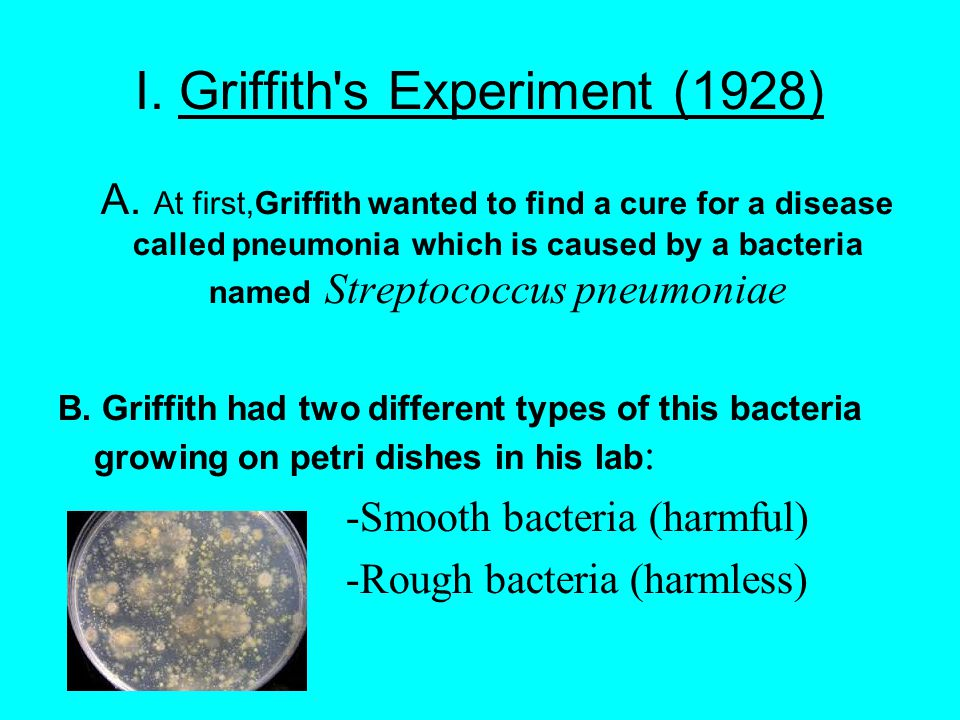 I. Griffith s Experiment (1928) A.