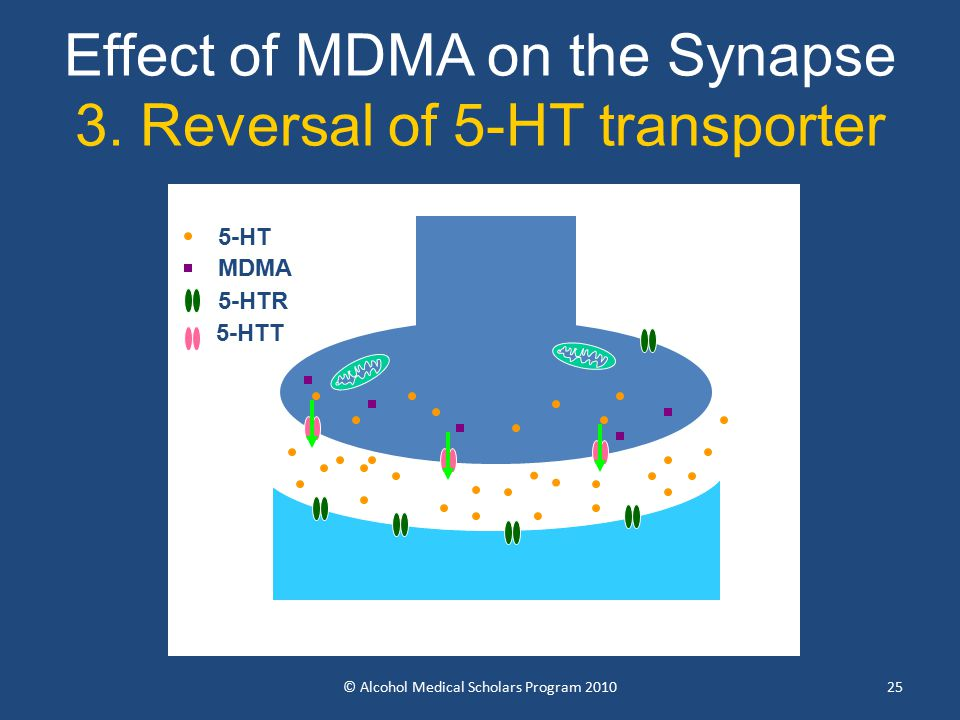 25 Effect of MDMA on the Synapse 3.