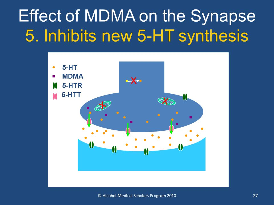 27 Effect of MDMA on the Synapse 5.