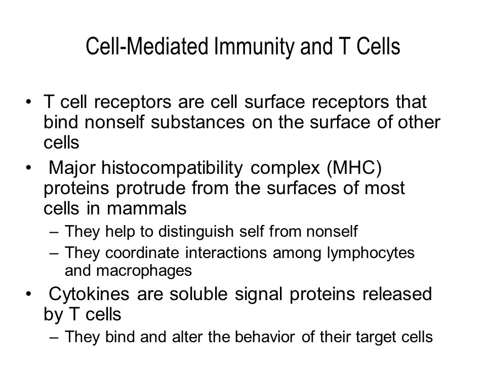 Cell-Mediated Immunity and T Cells T cell receptors are cell surface receptors that bind nonself substances on the surface of other cells Major histocompatibility complex (MHC) proteins protrude from the surfaces of most cells in mammals –They help to distinguish self from nonself –They coordinate interactions among lymphocytes and macrophages Cytokines are soluble signal proteins released by T cells –They bind and alter the behavior of their target cells