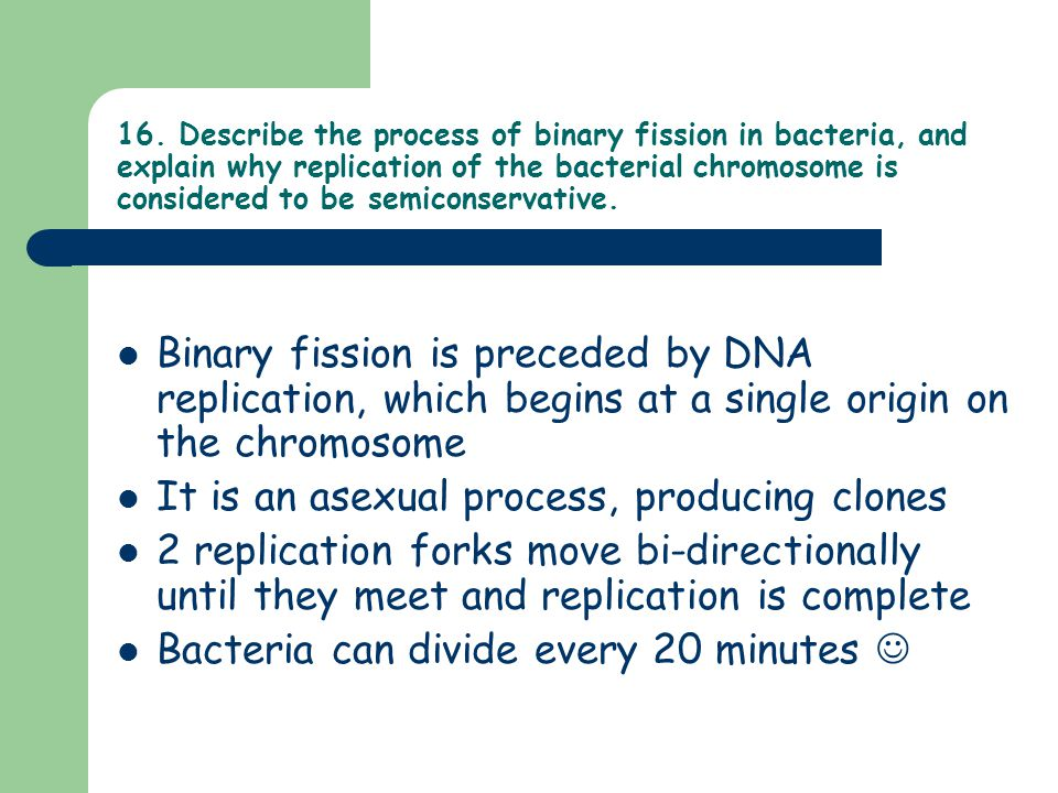 16. Describe the process of binary fission in bacteria, and explain why replication of the bacterial chromosome is considered to be semiconservative.
