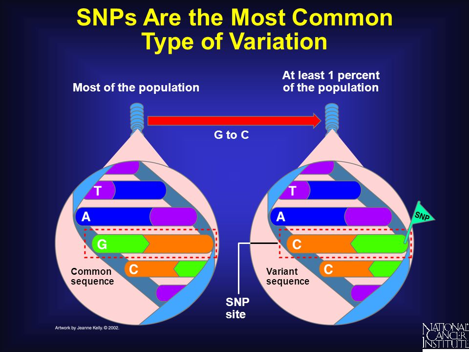 SNPs Are the Most Common Type of Variation At least 1 percent of the population Most of the population Common sequence G to C SNP site Variant sequenc