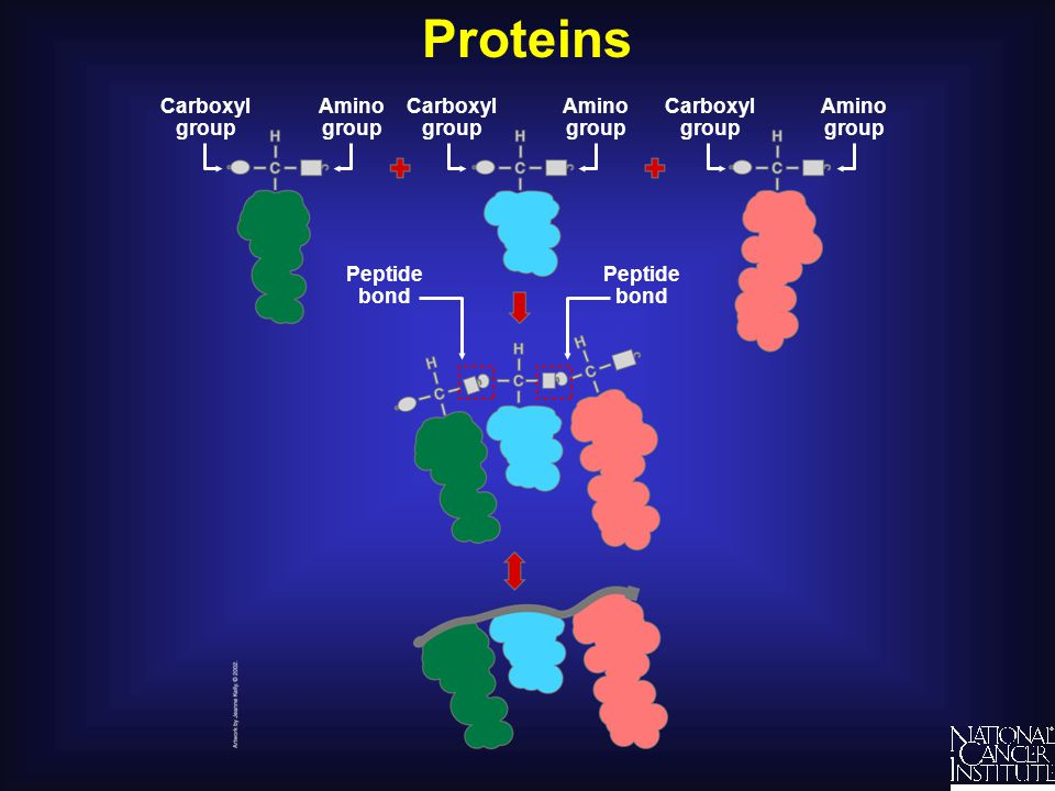 Proteins Amino group Carboxyl group Peptide bond Amino group Carboxyl group Peptide bond
