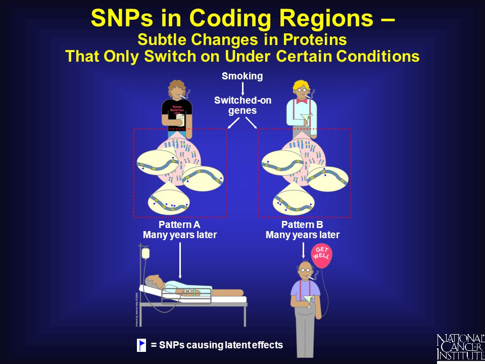 SNPs in Coding Regions – Subtle Changes in Proteins That Only Switch on Under Certain Conditions Smoking Switched-on genes Pattern A Many years later