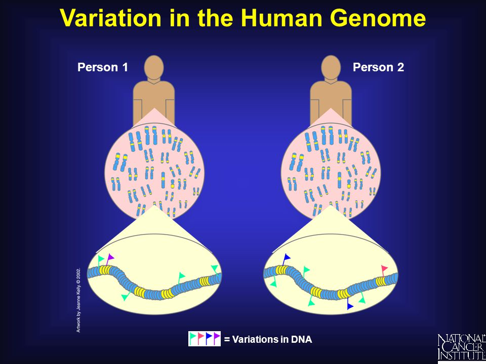 Variation in the Human Genome Person 1Person 2 = Variations in DNA