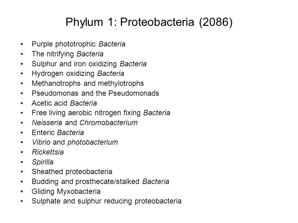 Non-photosynthetic proteobacteria