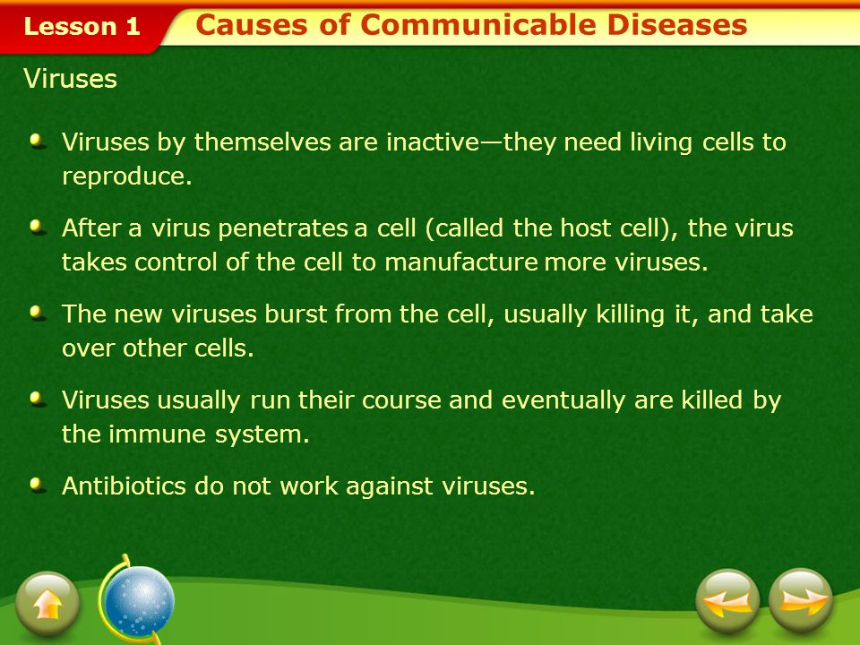 Lesson 1 Viruses Viruses by themselves are inactive—they need living cells to reproduce.