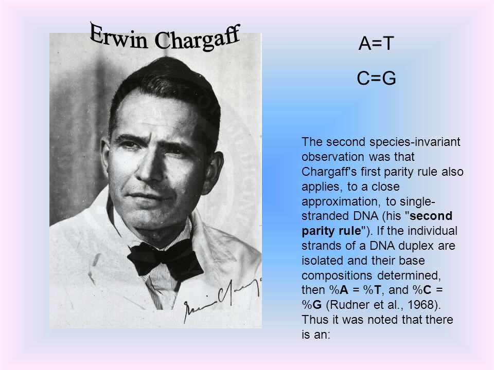 The second species-invariant observation was that Chargaff s first parity rule also applies, to a close approximation, to single- stranded DNA (his second parity rule ).