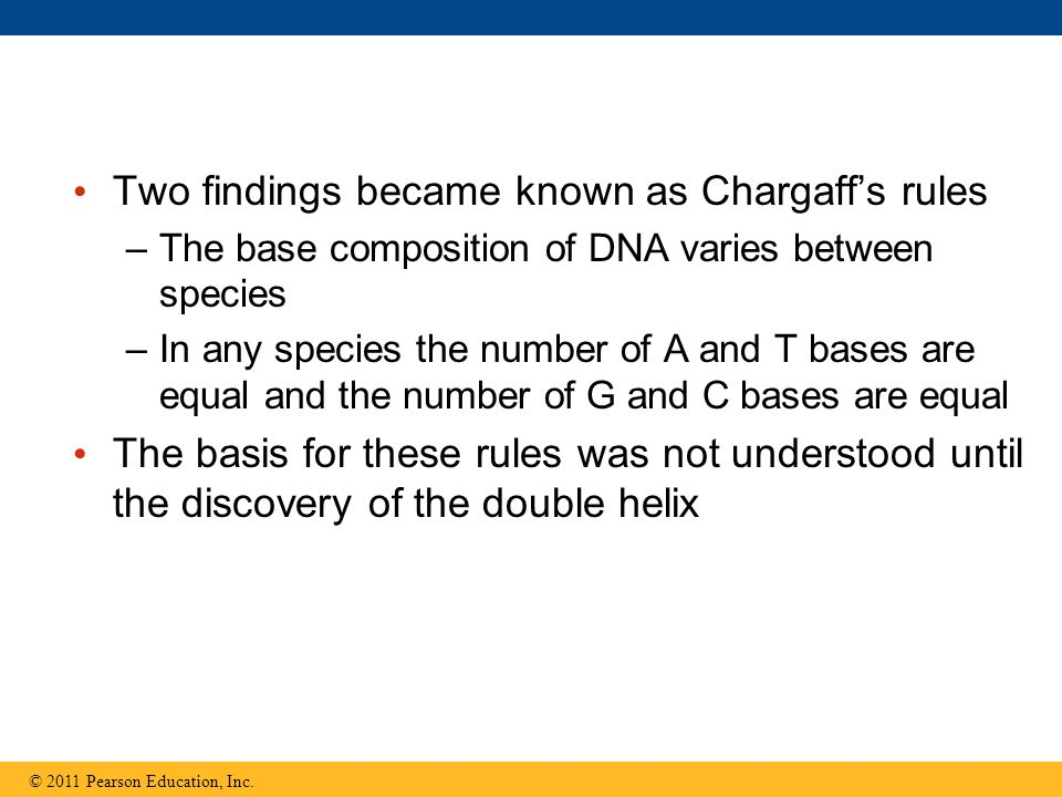 Two findings became known as Chargaff's rules –The base composition of DNA varies between species –In any species the number of A and T bases are equa