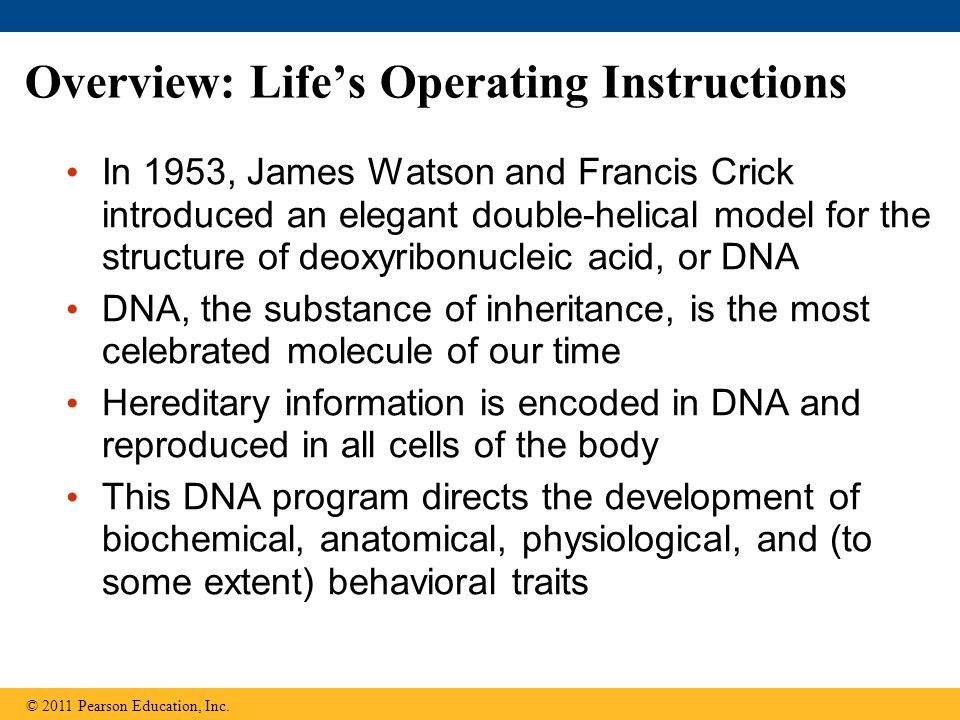 Overview: Life's Operating Instructions In 1953, James Watson and Francis Crick introduced an elegant double-helical model for the structure of deoxyr