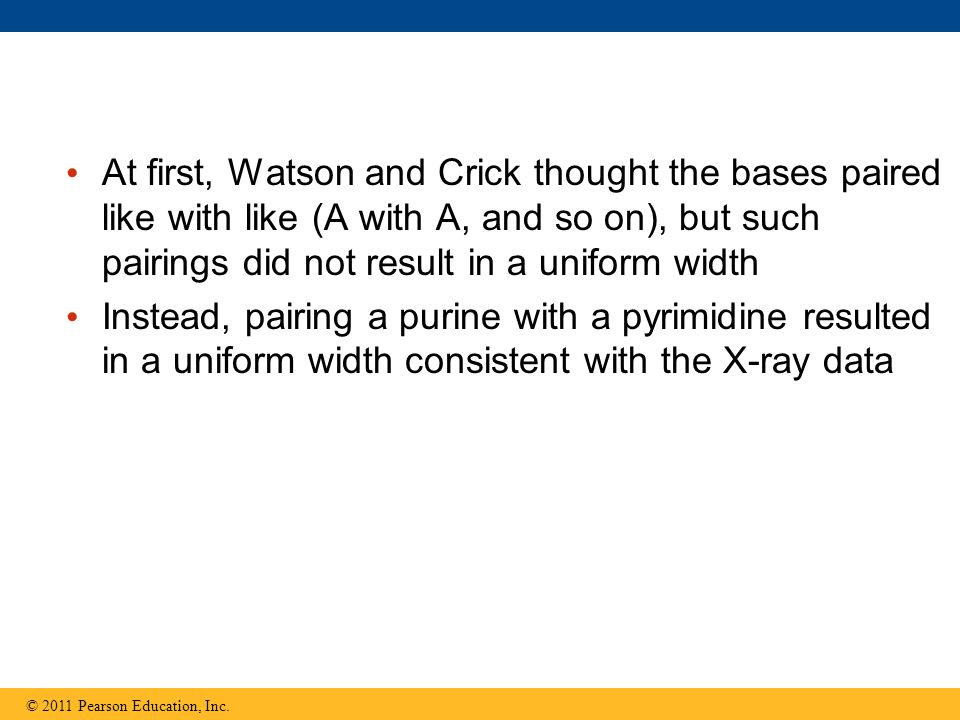 At first, Watson and Crick thought the bases paired like with like (A with A, and so on), but such pairings did not result in a uniform width Instead,