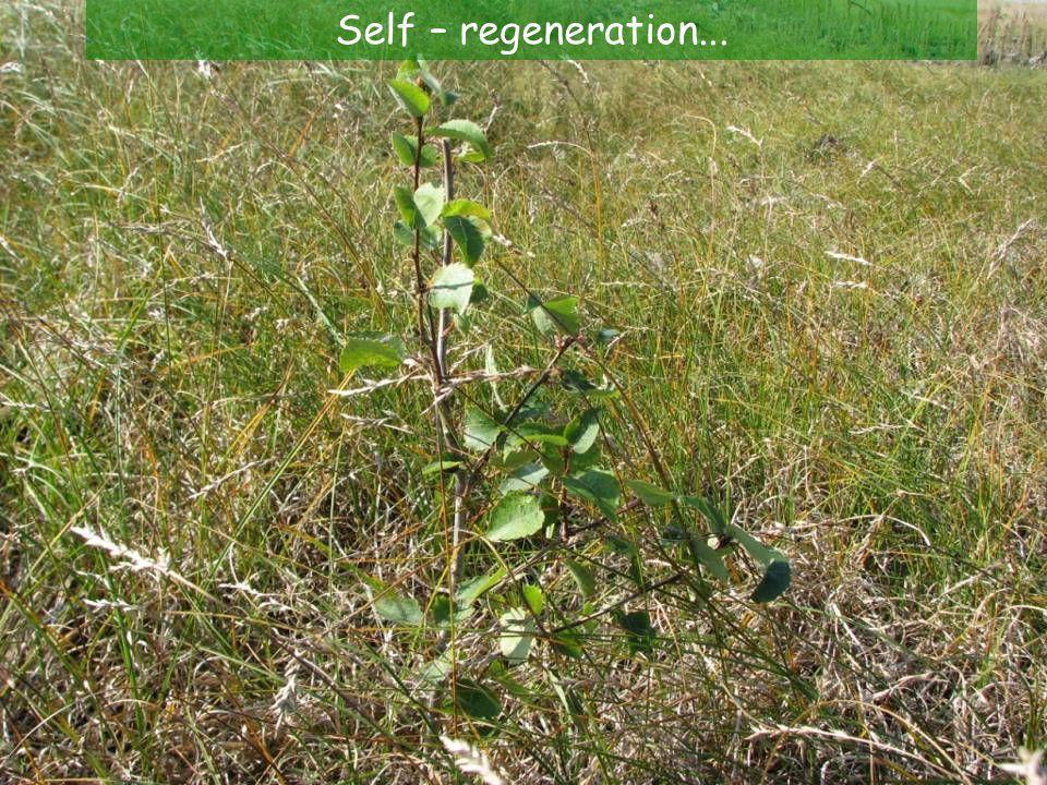 Self – regeneration...