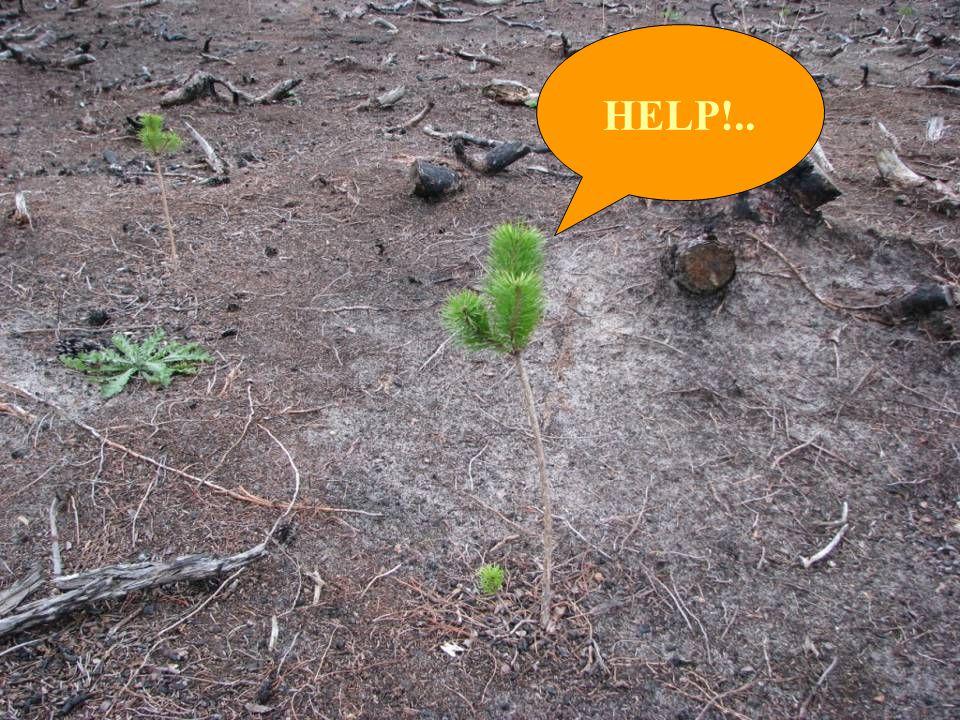 HELP!..
