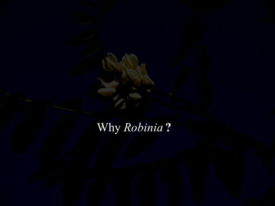 Why Robinia