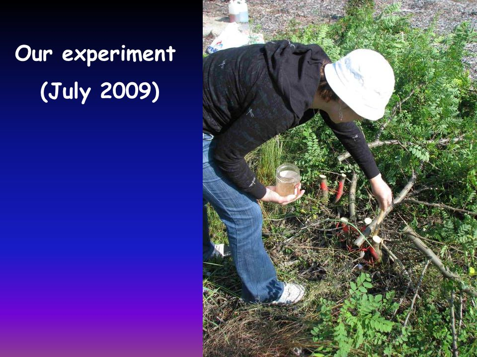 Our experiment (July 2009)