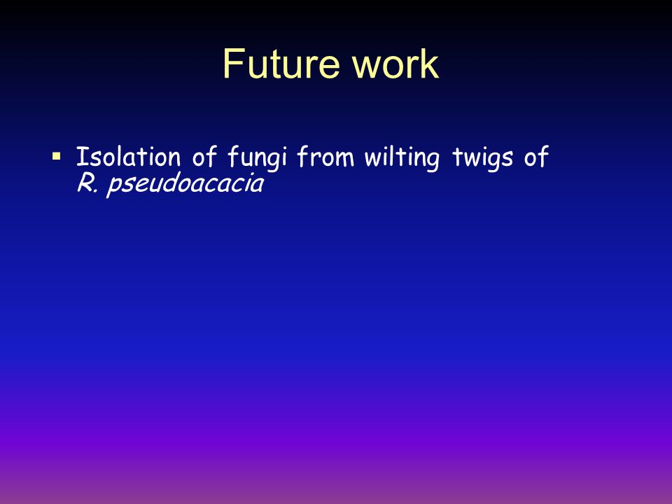 Future work  Isolation of fungi from wilting twigs of R. pseudoacacia
