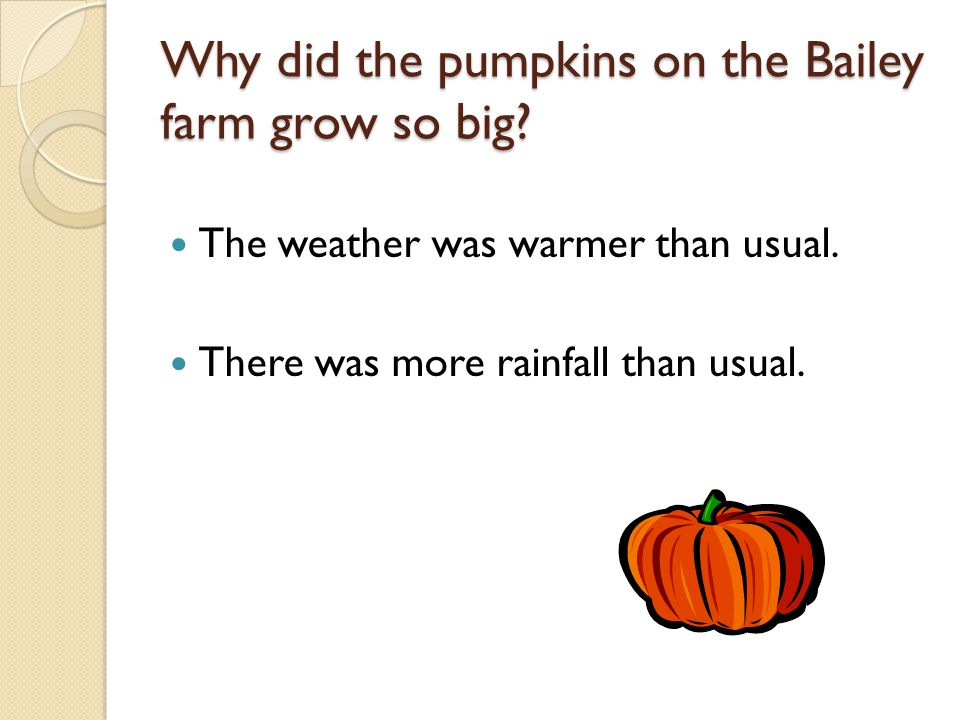 Why did the pumpkins on the Bailey farm grow so big.